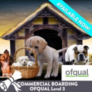 Dog Business course card